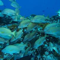 メキシコ・コスメル島ダイビング