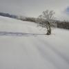 ゲレンデの木