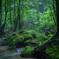 苔岩と森の木々