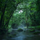 森の中で 9
