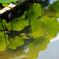 ハス池の夏雲