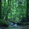 森の中で 11