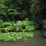 日本庭園 盛夏