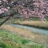 春先取り♪