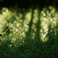 夜の雨が明けて;やっと太陽が出た〜!