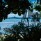 木陰から望む伊江島
