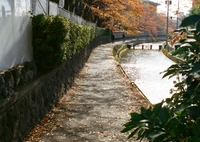京都 白川沿い