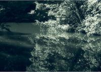 森の中の小さな池