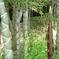竹の里・富士竹類植物公園-④