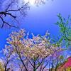 春光-2011