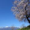 桜`11安曇野蒼天編