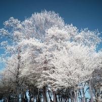色を失った木々