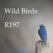 WildBirds