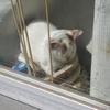 猫の日向ぼっこ