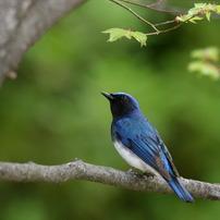 しあわせの〜①空を見上げる青い鳥