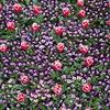 春柄の絨毯