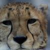 Animals-3-