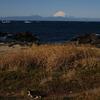 富士山と猫