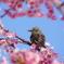 桜の額縁。