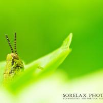 昆虫macroの世界
