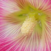 flowersプロローグ