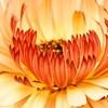 燃ゆる花弁
