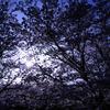 太陽を覆う桜