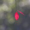 秋の光に染まる
