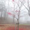 幻想的な紅葉と、華厳の滝