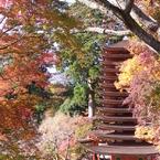 紅葉の中の塔。