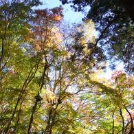 秋の日差し。