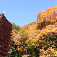 談山神社の秋。