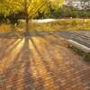 秋色の午後