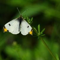 リバーサイド散歩道の蝶