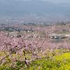 4月の山梨は正に桃源郷