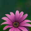 Quiet flowering