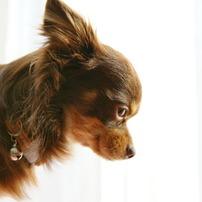 愛犬ココの一年