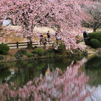 桜 (2012)