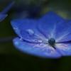 今春よりの花々です♪➁