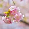 """春の """"Bouquet"""" を・・・"""