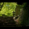新 緑 - 2012 -
