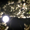 月と桜と春の宵