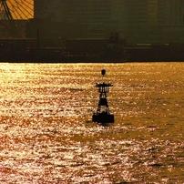Yokohama Bay side Photo 1