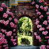 Da Vinci Garden