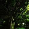 夜の帳の中緑輝く