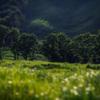 『ノルウェイの森』ロケ地の砥峰高原