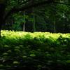 緑の中で深呼吸