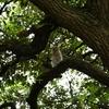 6月 巨木に抱かれて