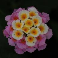 花が咲いたぁ
