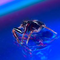 ハエトリグモの世界